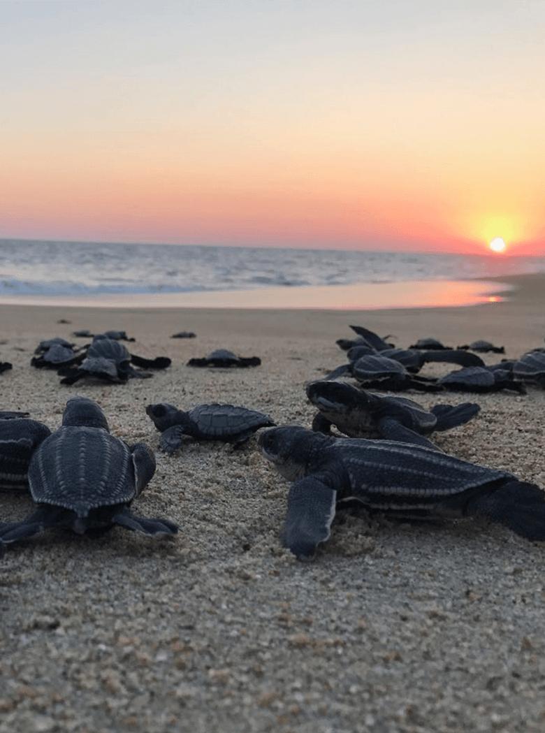 Liberacion de tortugas en Puerto Escondido, Oaxaca México.