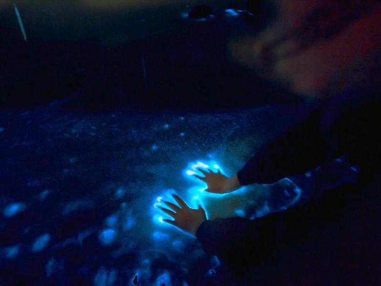 Bioluminiscencia puerto escondido con vidasurf