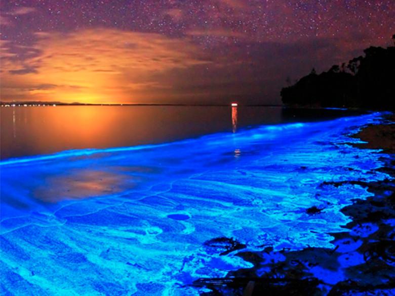 Tour a la biolumiscencia